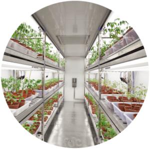 rośliny w laboratorium