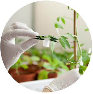 badanie rośliny