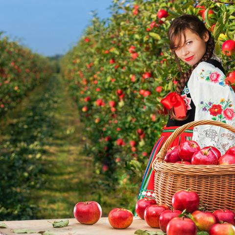 kinactiv fruit key visual
