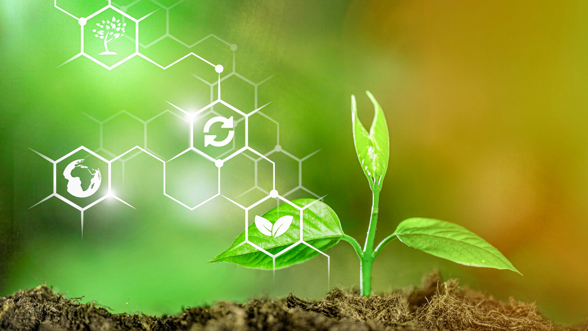 Rozwijająca się roślina