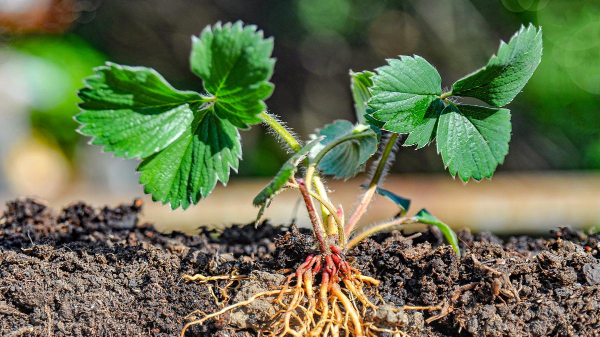 Roślina i jej widoczne korzenie