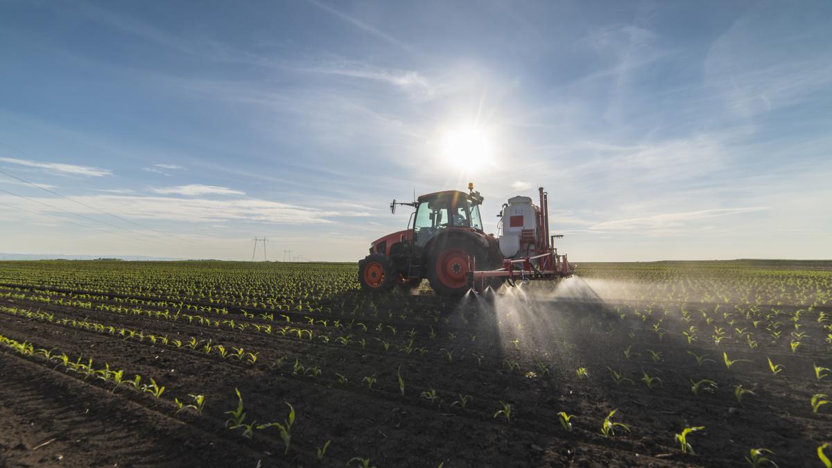 Jak pomóc na uszkodzenia herbicydowe w kukurydzy?